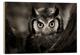 Wood print  White-faced Owl perched in a tree - Johan Swanepoel
