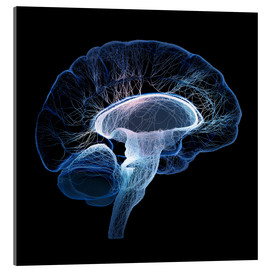 Acrylic glass  Human Brain illustrated with network of nerves - Johan Swanepoel