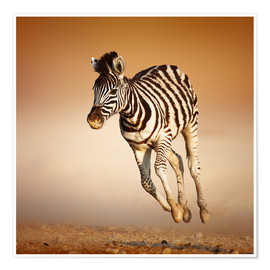 Premium poster Zebra calf running in dusty Etosha desert