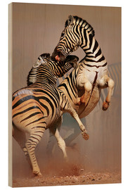 Wood print  Two Stallions fighting and biting with raised legs - Johan Swanepoel