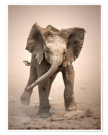 Premium poster Little Elephant mock charging