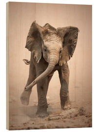 Wood print  Little Elephant mock charging - Johan Swanepoel