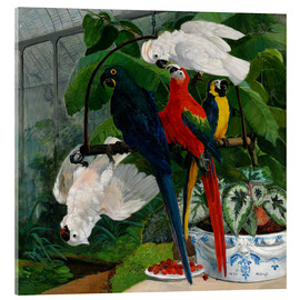 Acrylic print  Parrots in a greenhouse - Filippo Palizzi