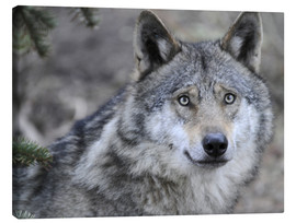 Canvas print  My friend, the Wolf