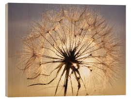 Wood print  Dandelion in sunlight