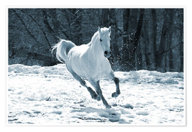 Premium poster Gray mare in snow
