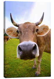 Canvas print  Erna the cow