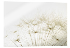 Acrylic glass  fluffy dandelion