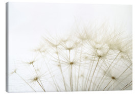 Canvas  fluffy dandelion