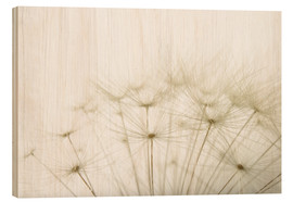 Wood  Fluffy dandelion