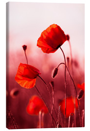 Canvas  Poppies at sunset