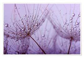 Premium poster  purple raindrops