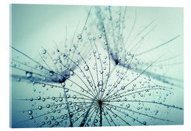 Acrylic print  Morning dew catcher