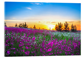 Acrylic glass  Sunrise over a blossoming meadow