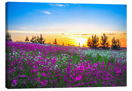 Canvas print  Sunrise over a blossoming meadow