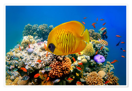 Premium poster  Tropical reef
