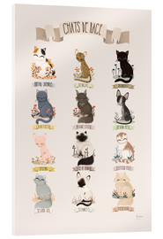 Acrylic glass  cat breeds french - Kanzi Lue