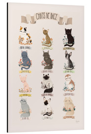 Aluminium print  cat breeds french - Kanzilue