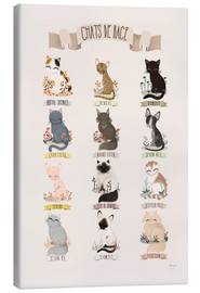 Canvas print  cat breeds french - Kanzi Lue