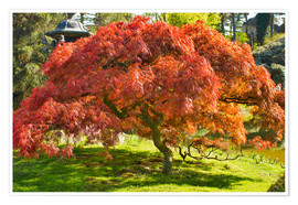 Premium poster Japanese maple