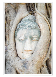 Premium poster Buddha head behind tree trunk in Ayutthaya, Thailand