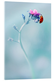 Acrylic glass  Ladybug on forget me not flower - Jaroslaw Blaminsky