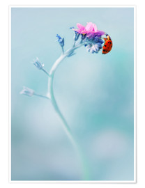 Premium poster Ladybug on forget me not flower