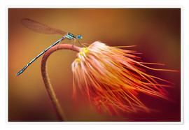 Premium poster Dragonfly on a dry plant