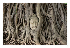 Premium poster Buddha statue in the tree roots at Wat Mahathat