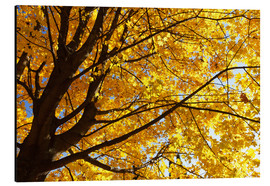 Alu-Dibond  Golden Autumn Tree II