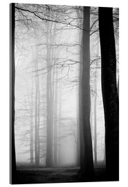 Acrylic glass  foggy trees