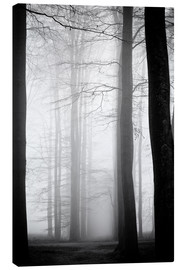 Canvas  foggy trees
