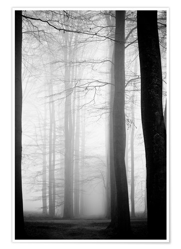 Premium poster Trees in fog