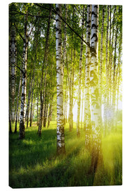 Canvas print  Birches flooded with light