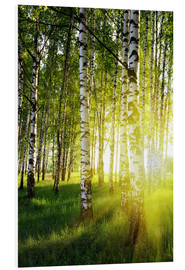 Foam board print  Birches flooded with light