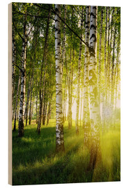 Wood  Birches flooded with light
