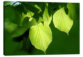 Canvas print  fresh leaves of linden