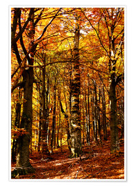 Premium poster yellow trees in a forest