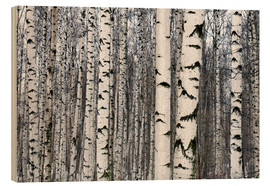 Wood print  Birch forest in winter