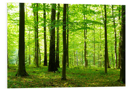 Forex  Sunlight in the green forest