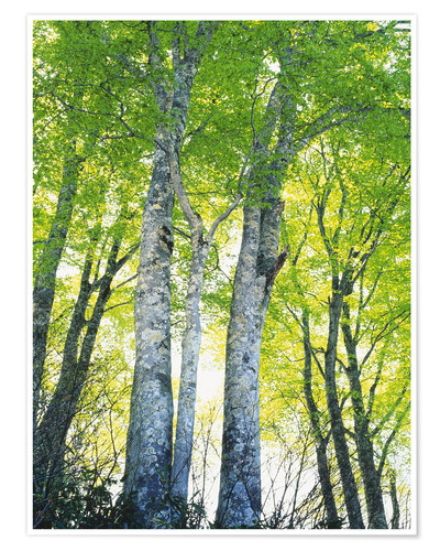 Premium poster Path in forest in sunlight