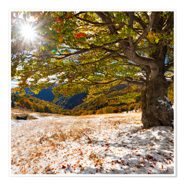 Premium poster First snow in autumn