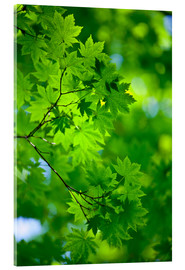 Acrylic print  Fresh green in spring