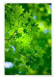 Premium poster Fresh green in spring