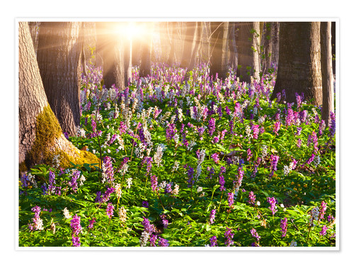 Poster meadow flowers in spring forest