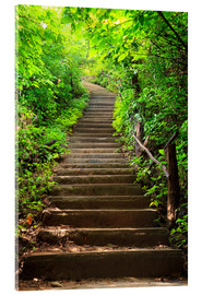 Acrylic print  Stairway through the forest