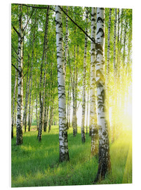Foam board print  Birches in summer forest