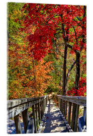 Acrylic glass  Wooden stairs in Autumn forest