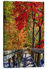 Canvas print  Wooden stairs in Autumn forest