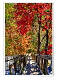 Premium poster Wooden stairs in Autumn forest